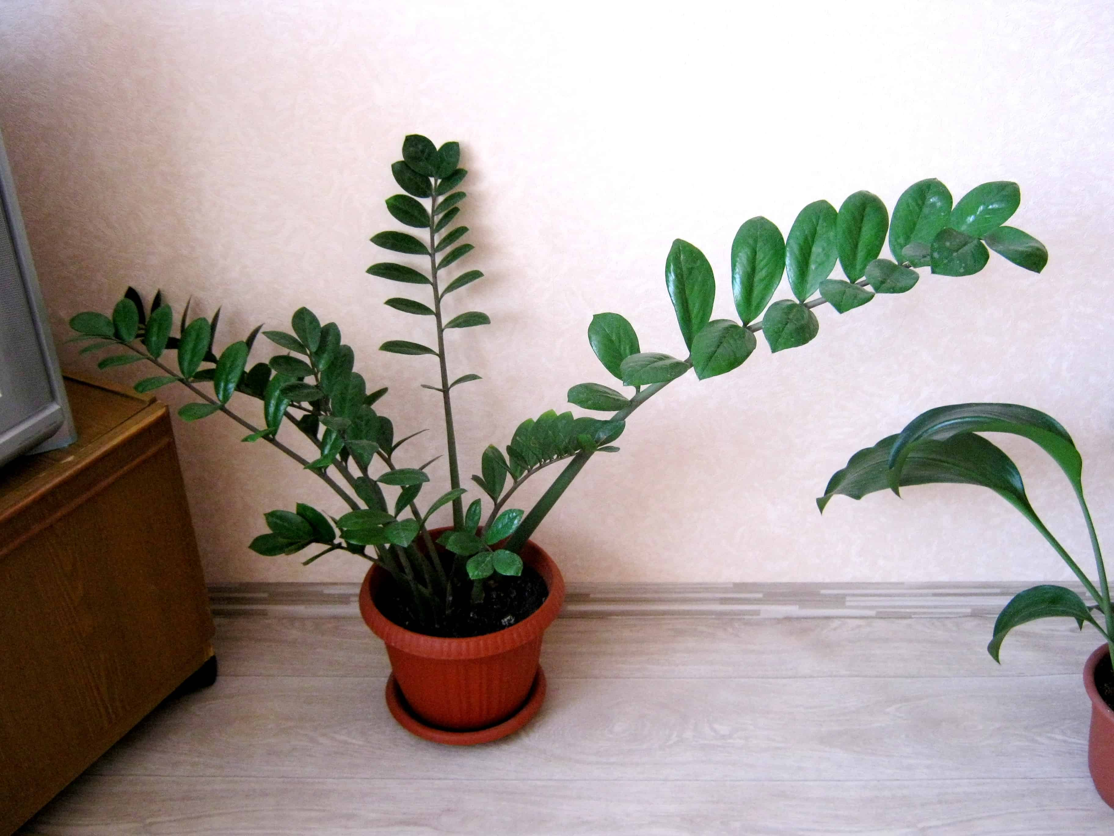 Новое растение в доме