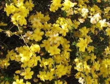фото цветов канди
