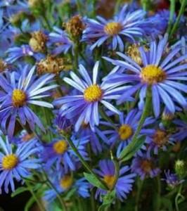 О цветах всё и всем Цветы многолетники для сада