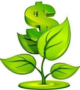 Комнатные цветы, притягивающие деньги
