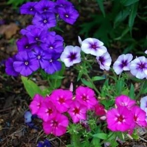 458Фото осенних цветов многолетних