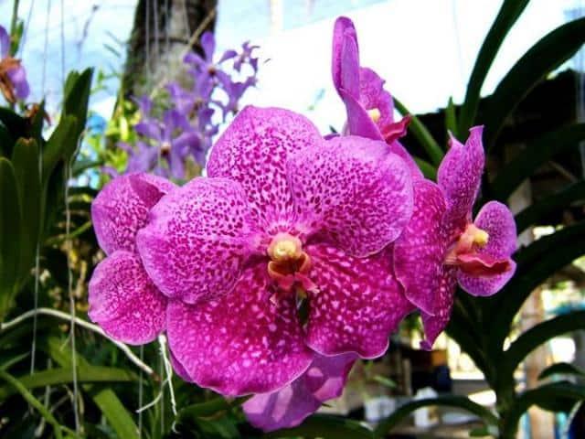 уход за орхидеей и пересадка в домашних условиях фаленопсис видео