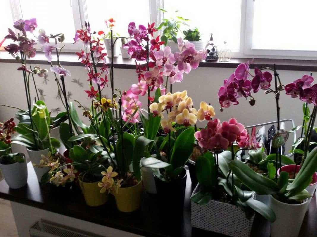 Орхидеи: лучшие сорта и уход за ними