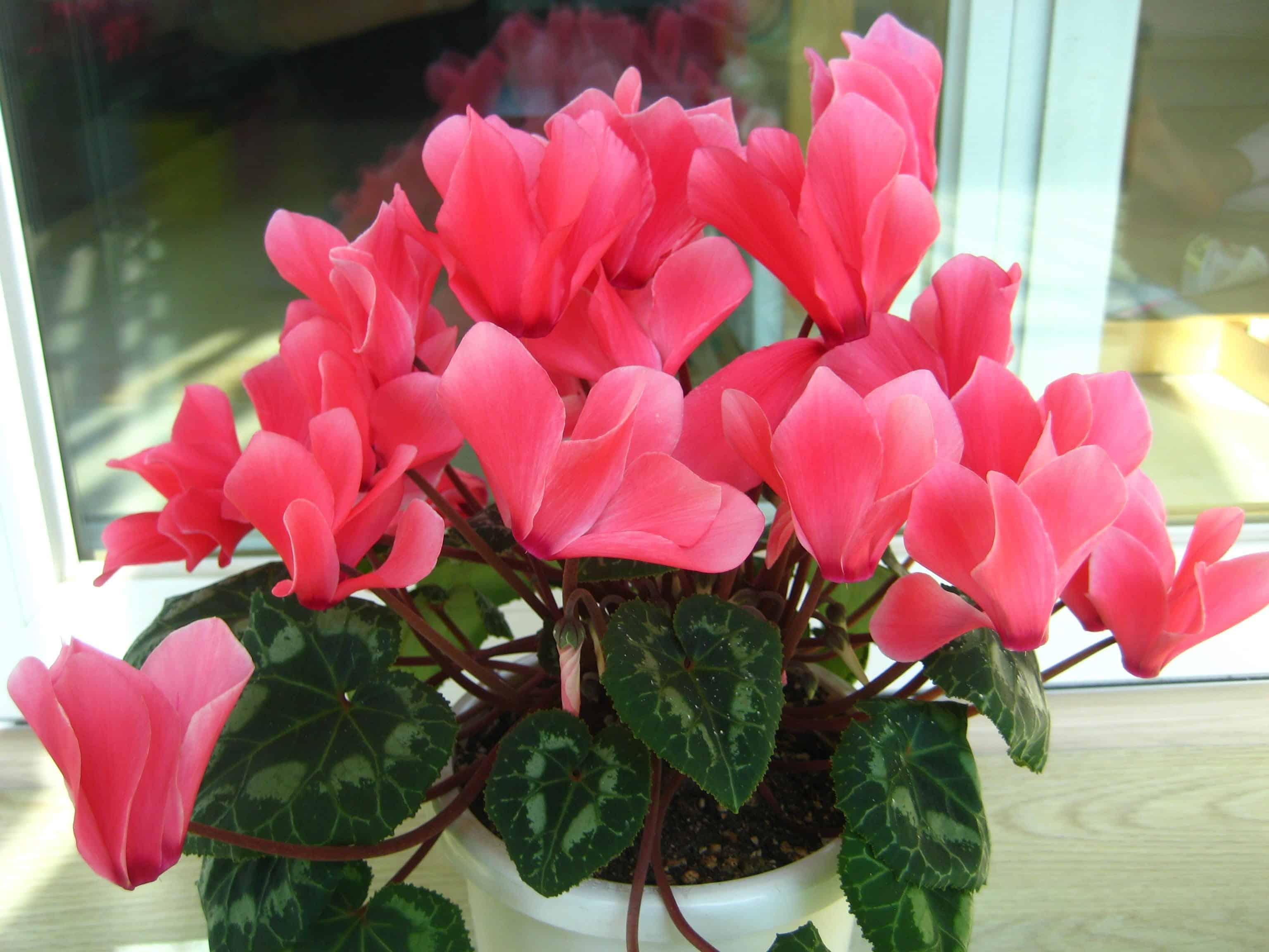 Комнатные растения в картинках с красивыми цветами