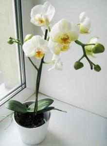 Размножение орхидей семенами: подготовка материалов