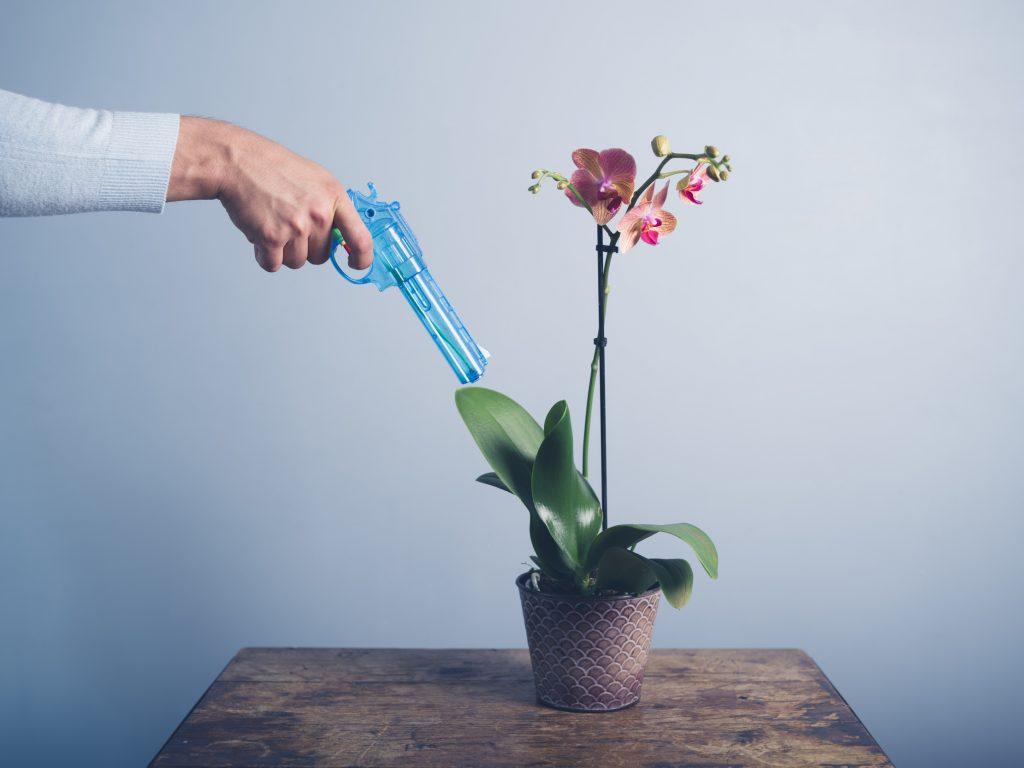 Паутина на орхидее как избавиться