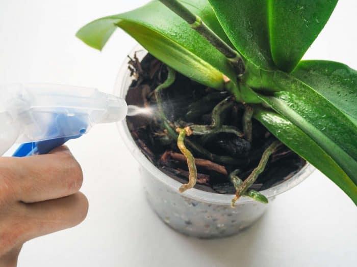 опрыскивание орхидеи от клещей