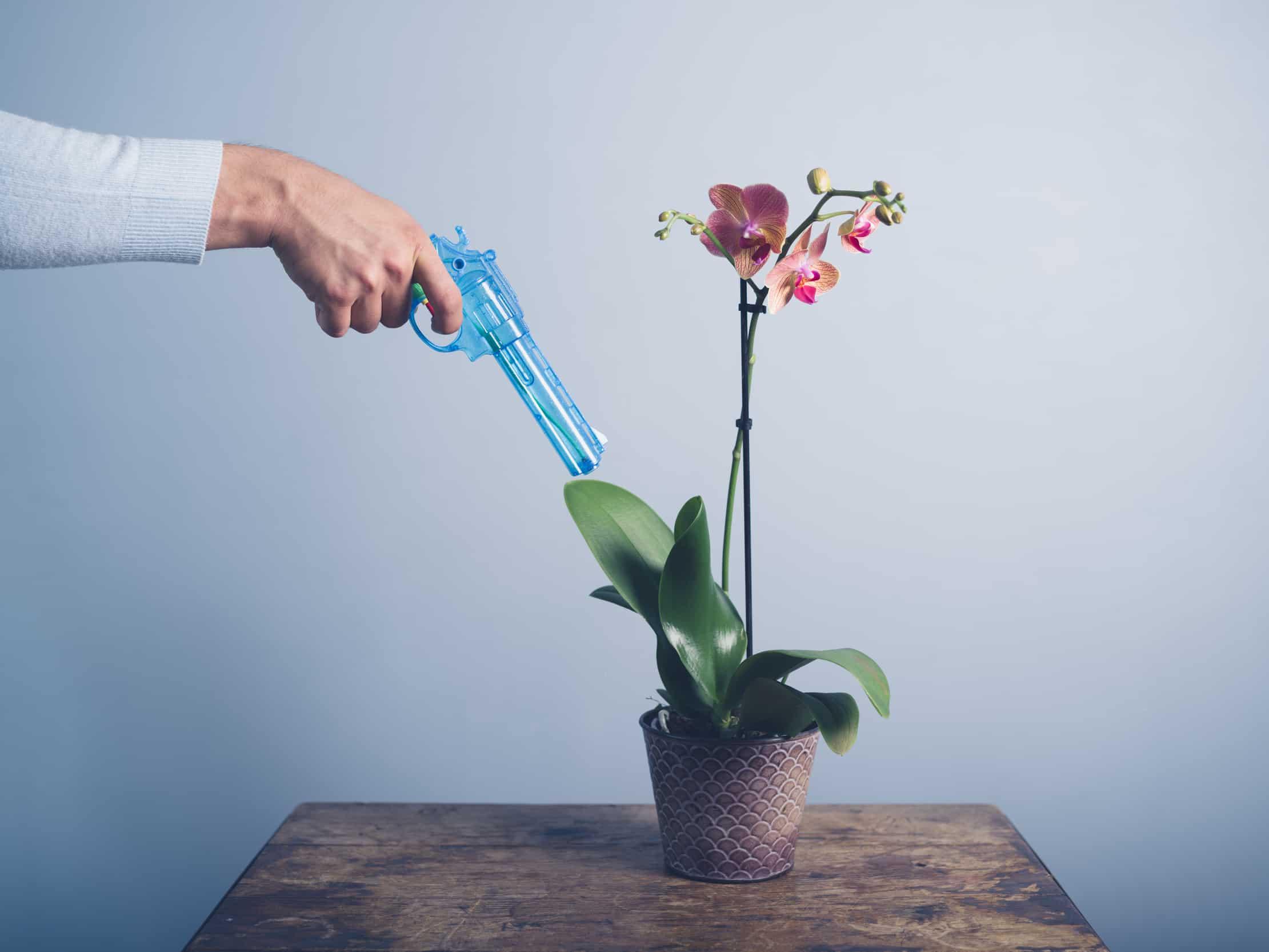 борьба с клещом на орхидее
