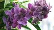 Трипсы на орхидеях – как выглядят вредители, описание разновидностей с фото, методы борьбы