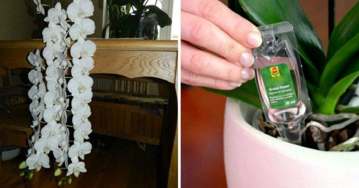 подкормка орхидей жидким удобрением
