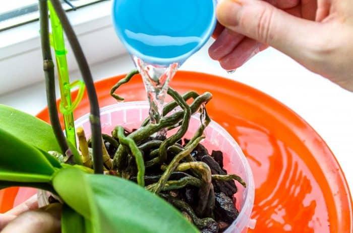 подкормка орхидей народными средствами