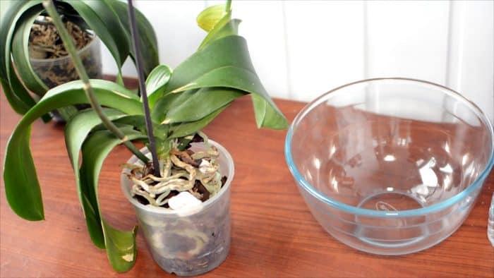увядание листев орхидеи