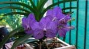 Орхидея ванда – виды с описанием и фото, особенности ухода, размножения и пересадки растения в домашних условиях