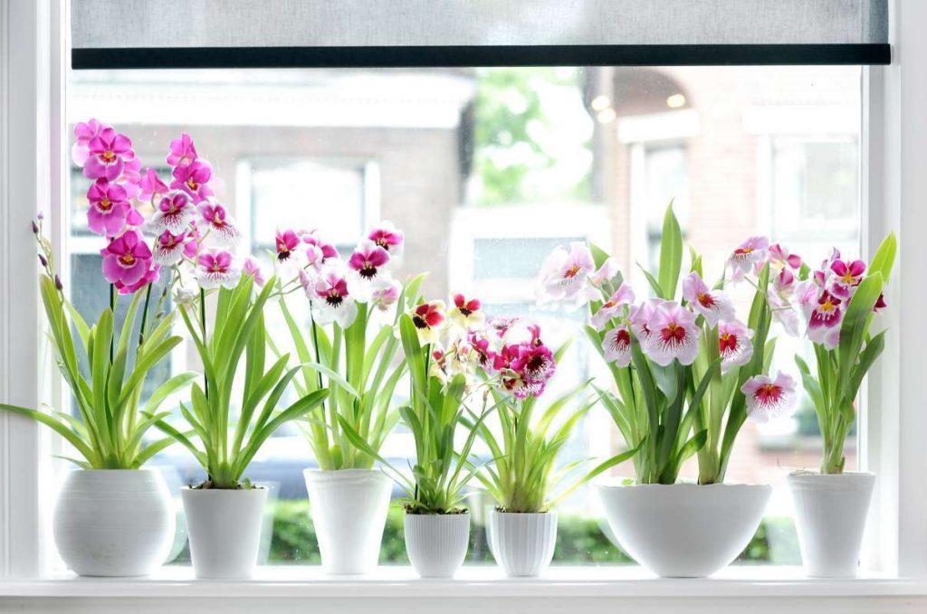 Пересадить орхидею первый раз