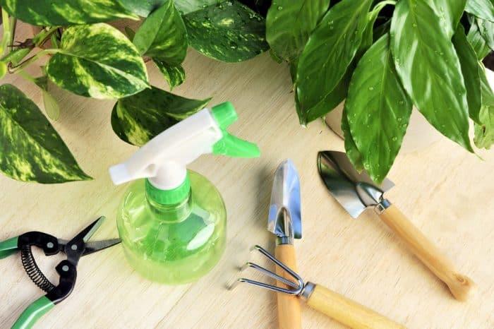 лопатки, ножницы и распылитель для пересадки орхидеи