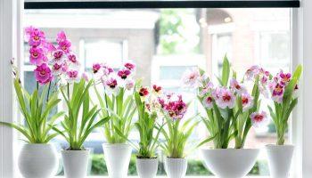 Пересадка орхидеи в домашних условиях – пошаговая инструкция с фото и правила пересадки старого растения или детки, общие советы по дальнейшему уходу